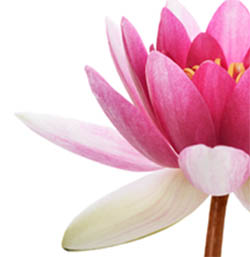 Lotus Stress Management Package