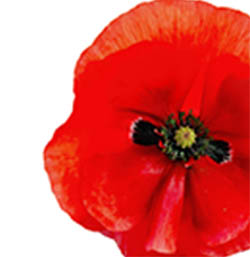 Poppy Stress Management Package